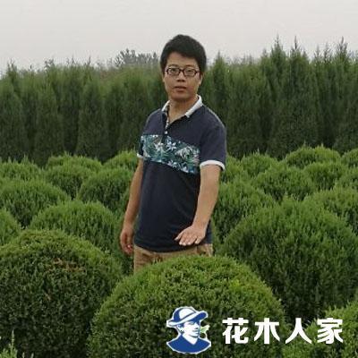 望都县屯河园林苗圃场李昌明