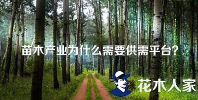苗木产业为什么需要供需平台