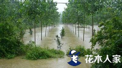 救苗木于涝害,其实还有更简单的方法