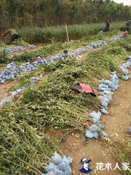 水腊苗圃基地实景照片