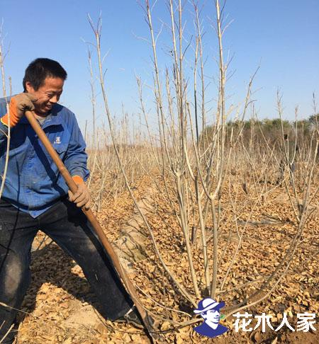 苗木市场需求已经大变脸 苗木人该如何选择树种