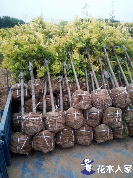 美植袋布为何能解决树苗存活率