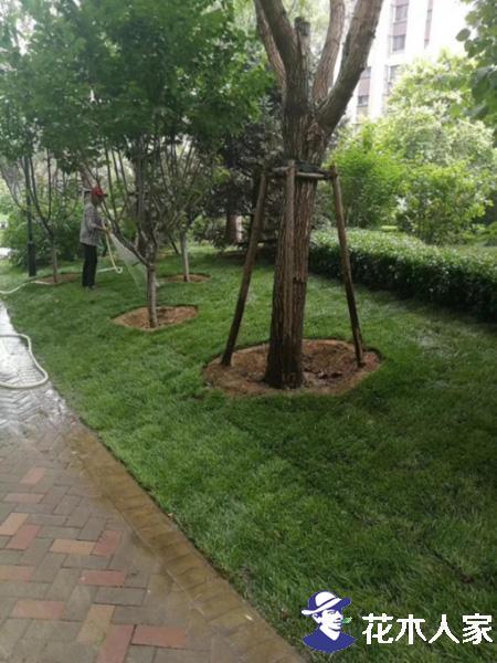 石家庄草坪照片