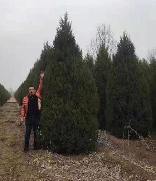 定州市苗圃企业带动苗木产业上档升级